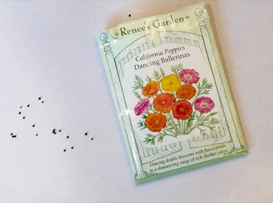 Seed from Dancing Ballerinas California Poppies Renee's Garden Resized