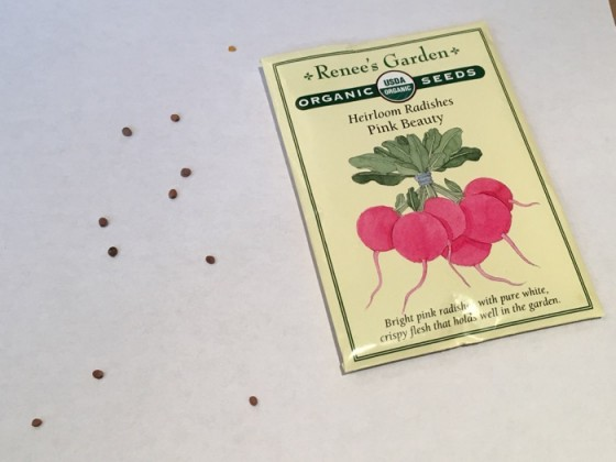 Seed from Pink Beauty Radishes Renee's Garden