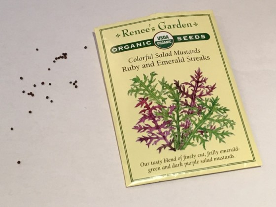 Seed from Ruby and Emerald Streaks Salad Mustards Renee's Garden