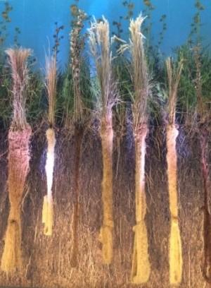 Secret Life of Roots US Botanic Garden 6ftmama blog Still Growing Podcast