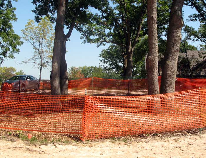 Understanding Roots Snow Fence does not Protect Trees 6ftmama blog Still Growing Podcast