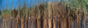 US Botanical Garden The Secret Life of Roots 6ftmama blog Still Growing Podcast