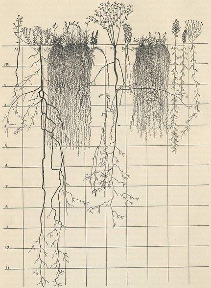Root Map Understanding Roots Robert Kourik 6ftmama blog Still Growing Gardening Podcast