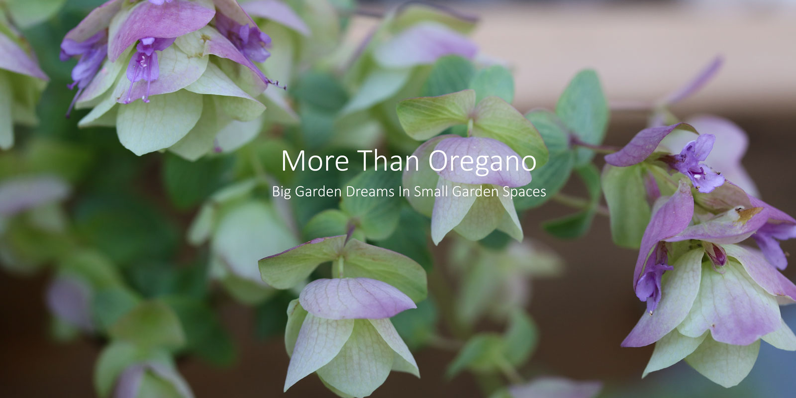 More Than Oregano Blog on the Still Growing gardening podcast 6ftmama blog