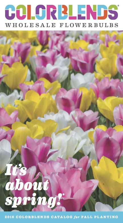 colorblends-catalog-2016-1st-annual-spring-bulb-party-on-still-growing-gardening-podcast-6ftmama-blog
