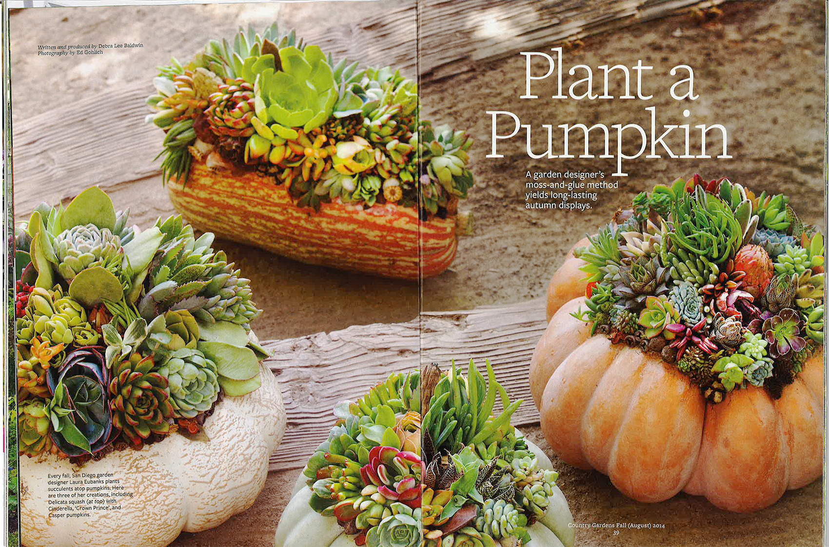 Country Gardens Spread Plant a Pumpkin Laura Eubanks on the Still Growing Gardening Podcast 6ftmama blog