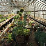 kelly-kelly-nursery-on-the-still-growing-gardening-podcast6ftmama-blog