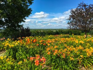 Day Two Highlights from the 2016 Garden Bloggers Fling