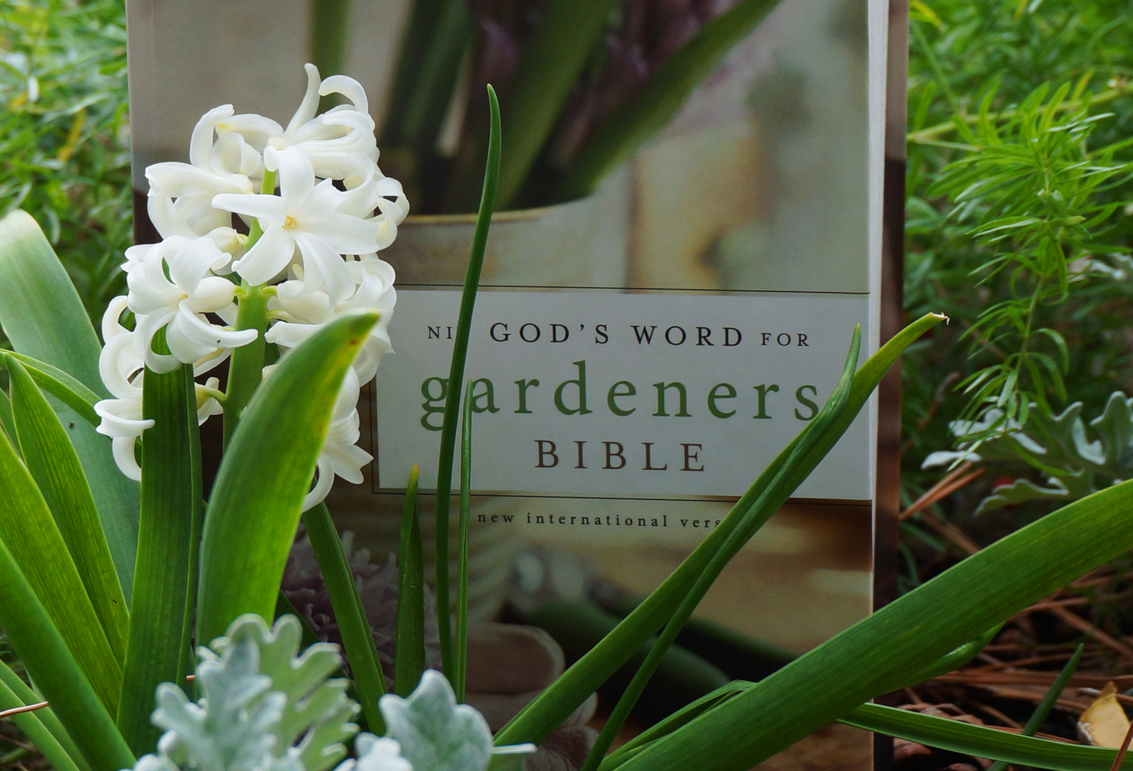 SG548: How to Draw Insight From the Gardens and Plants of the Bible with Shelley Cramm