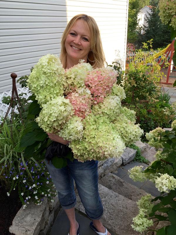 harvesting hydrangea Jennifer Ebeling