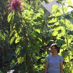 SG552: Experimental Gardening with Megan Phelps