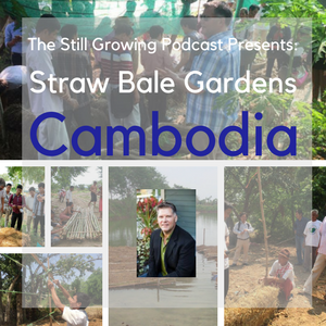 Straw Bale Gardens Cambodia
