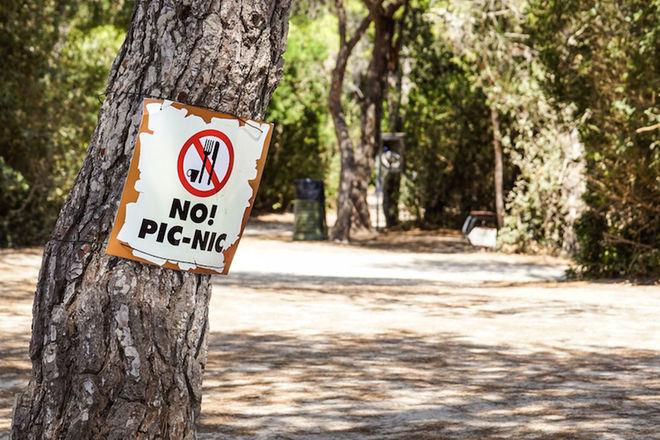 trees-picnic