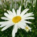 Student Gardener Photo