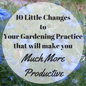 Ten Little Changes to Your Gardening Practice That Will Make You Much More Productive