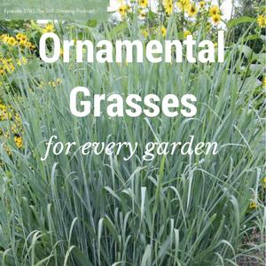 Ornamental Grasses (3)