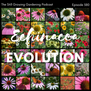 SG580: The Echinacea Evolution!